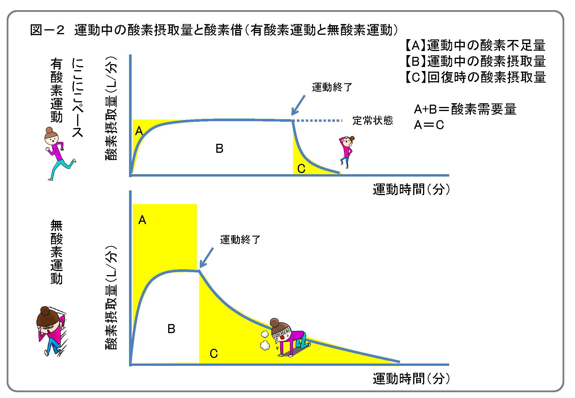 運動中の酸素摂取量と酸素借